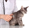 Ветеринарные клиники в Тяжинском